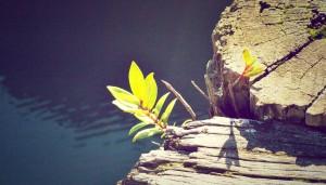 Uzori i idoli i njihov uticaj na kvalitet života